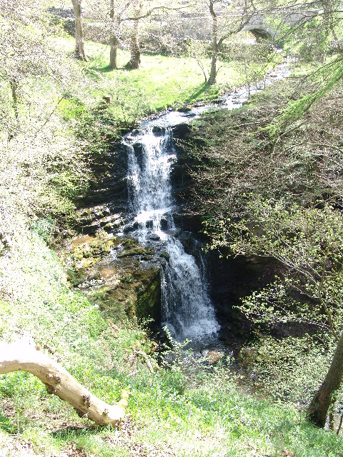 Scaleber Force