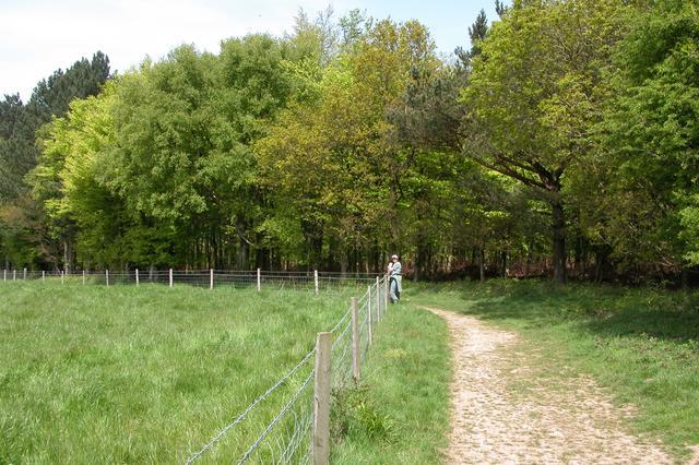 Woodland boundary near Kingly Vale