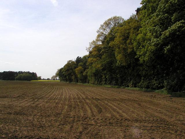 Wilson's Plantation