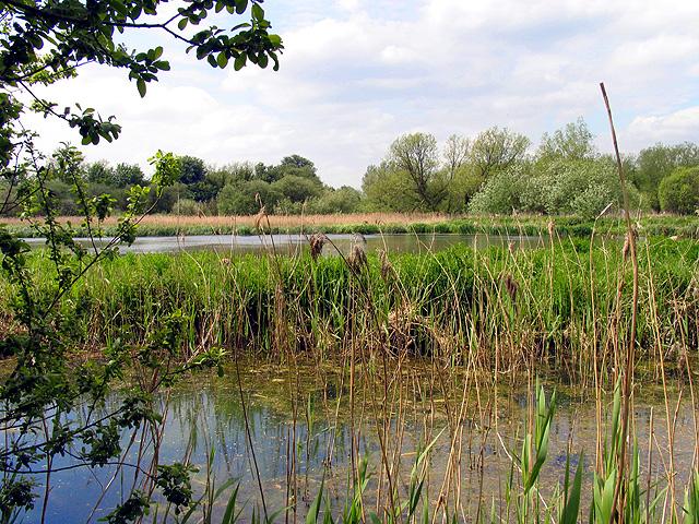 Thatcham Reedbeds Nature Reserve
