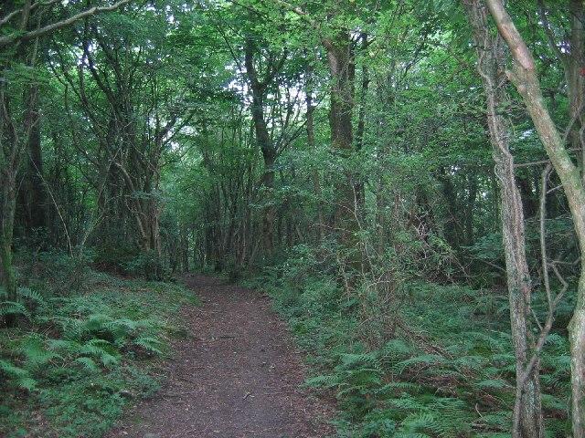Woods, Warton