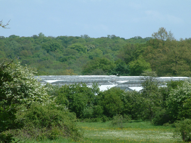 Greenhouses at Crews Hill