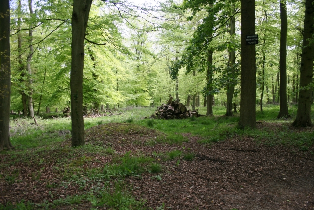 Commonhill Wood