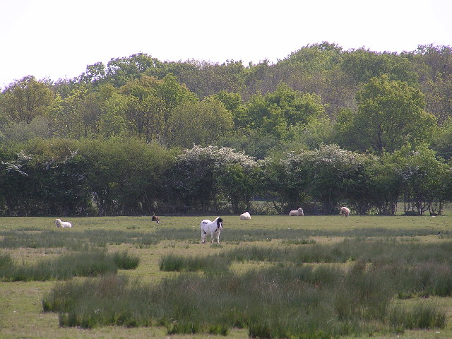 Lower Kites Wood.