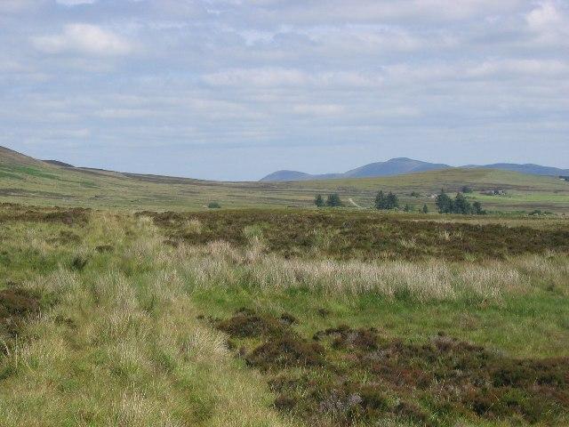 Bog track