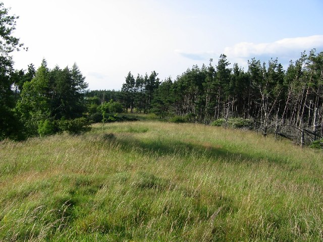 Greystoke Forest