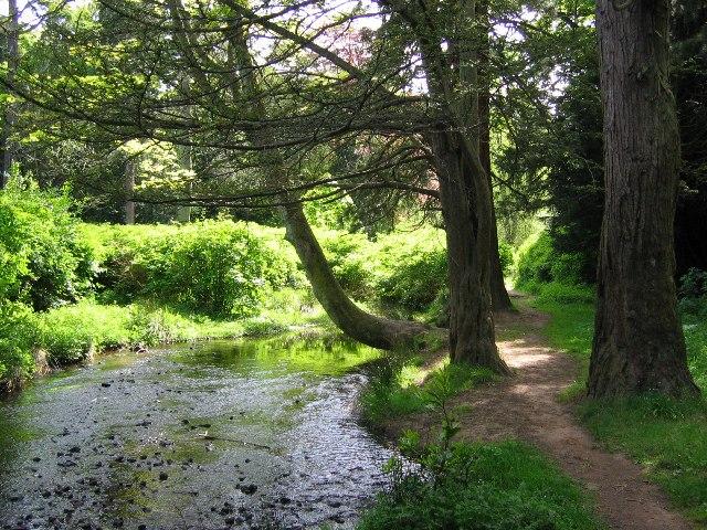 Covenanter's Wood