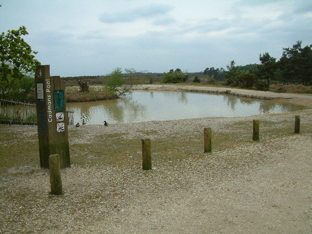 Cadman's Pool, New Forest