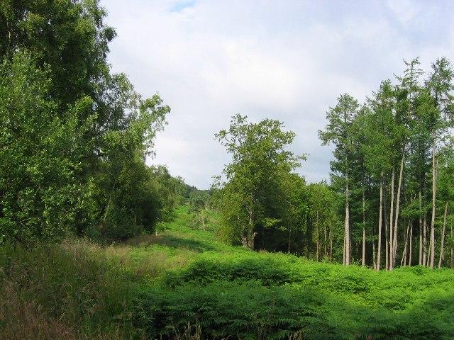 Cut line, Garshelloch Woods.