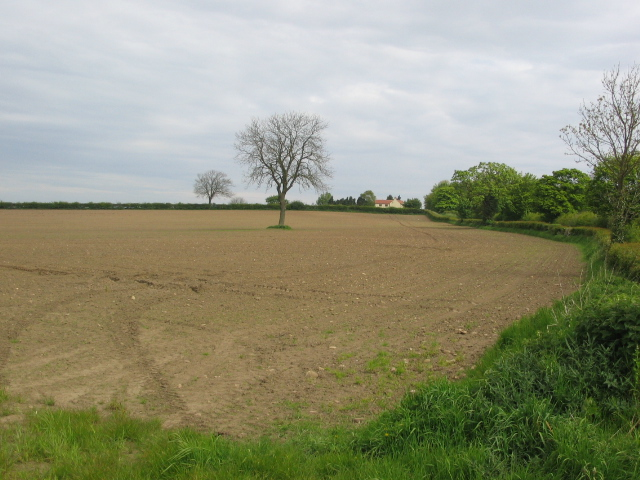 Field just north of Easingwold