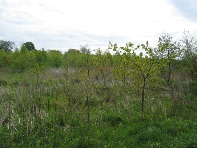 Millfield wetlands