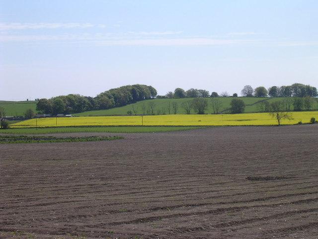 Farmland south of Murroes