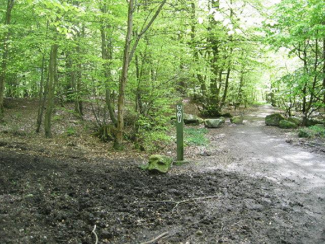 Den Wood
