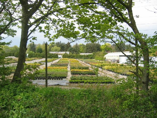 Ben Reid's Nursery, Pinewood Park
