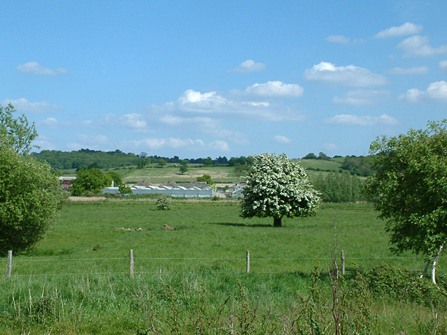 Sewardstone Marsh