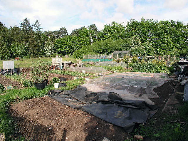 Allotments at Six Mile Bottom