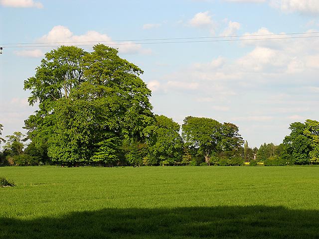 Deerpark: East Hendred