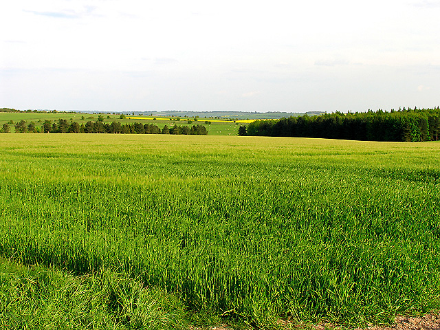 Farmland near East Hendred and West Ilsley