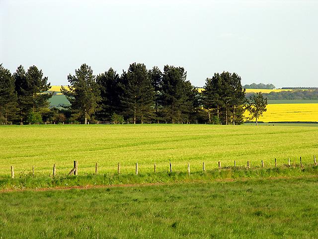 Farmland, Gallops and Abbots Heath