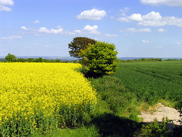 Rapeseed and Wheat Farmland near Rowstock and Harwell