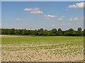 SU4789 : Farmland near East Hendred by Pam Brophy