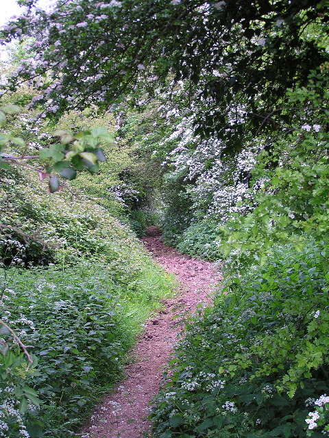 Public Bridleway towards Cladswell and Knowle Fields.