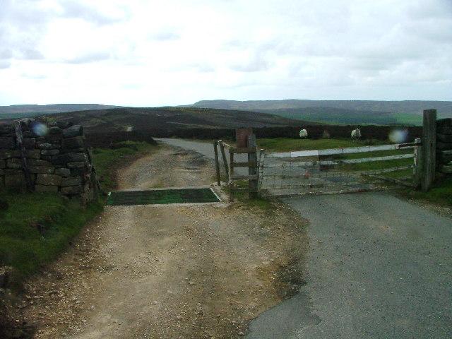 Cattle Grid, Juniper Gate