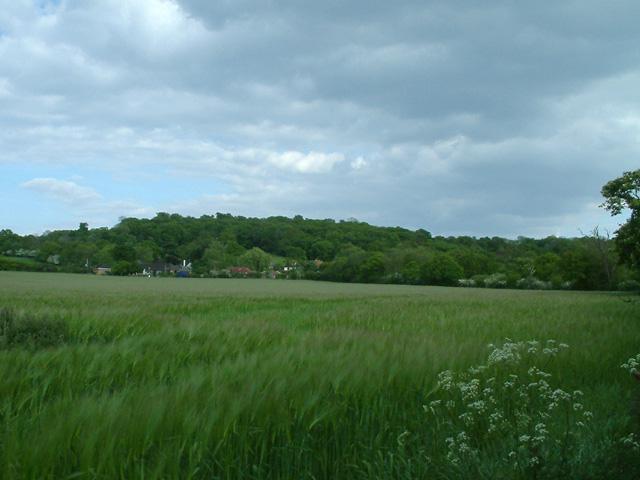 Field by Mott Street