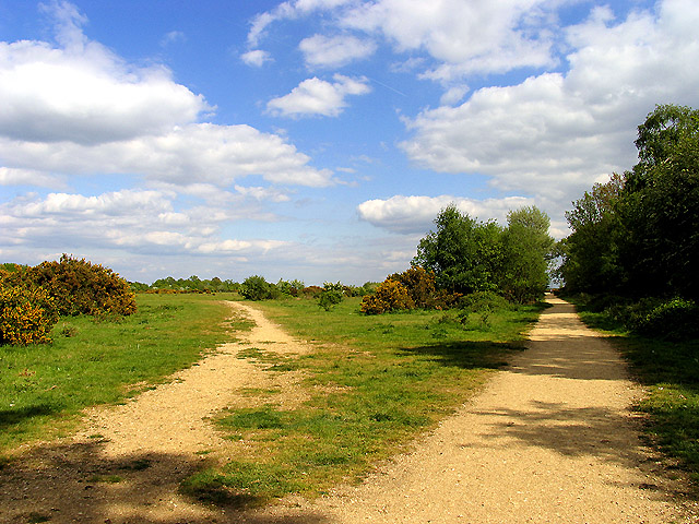 Greenham and Crookham Common Nature Reserve
