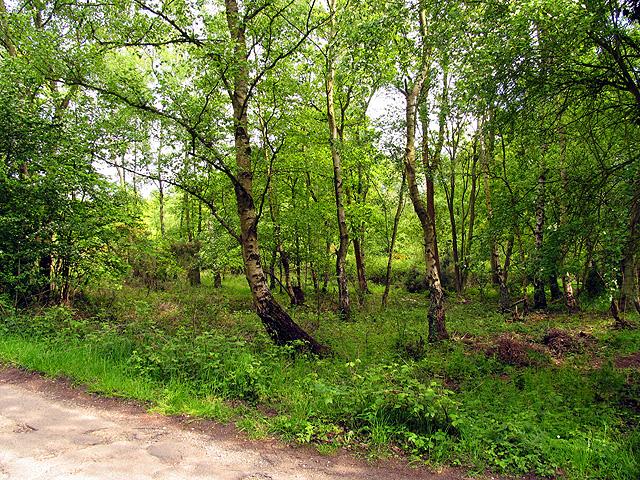Greenham, Crookham and Stroud Green Commons