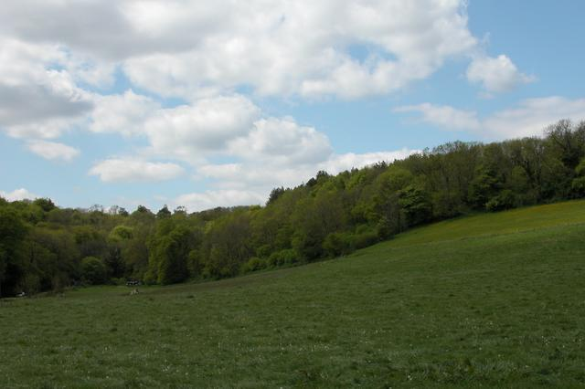 Limekiln Copse and Great Palmers Copse