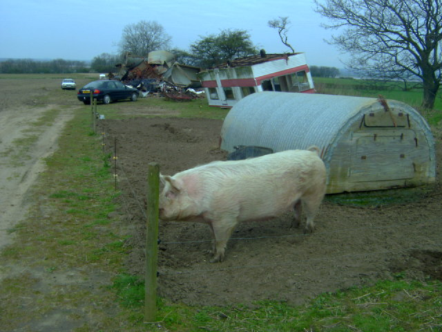 Pete's Pig