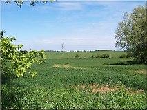 SE8819 : Willow Stump by Steve Parker