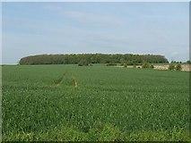 SE8719 : Coleby Wood by Steve Parker