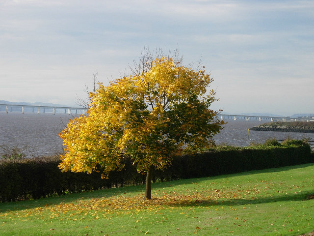 Autumn on the Tay