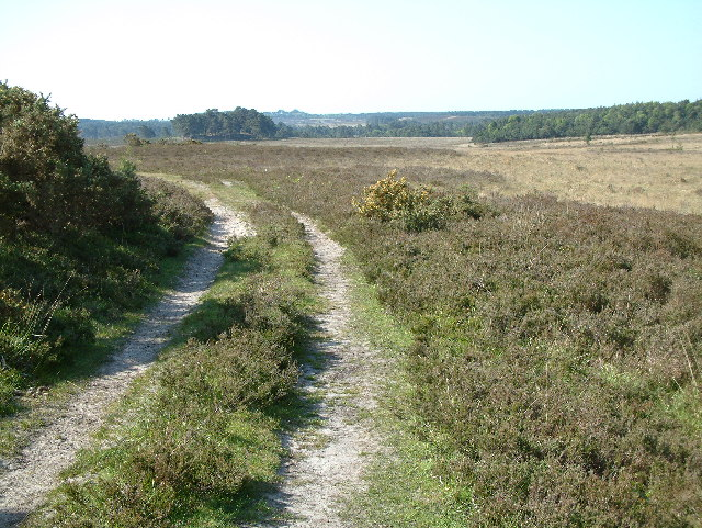 Strodgemoor Bottom, New Forest