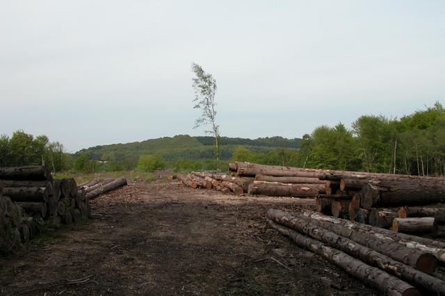 Logging operations at Hambledon Piece