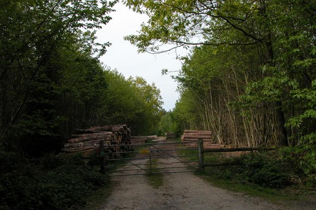 Logging operations at Coombe Hill
