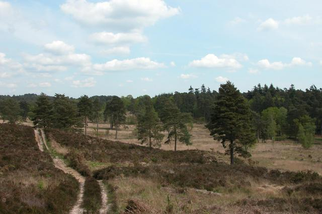 Longmoor Inclosure