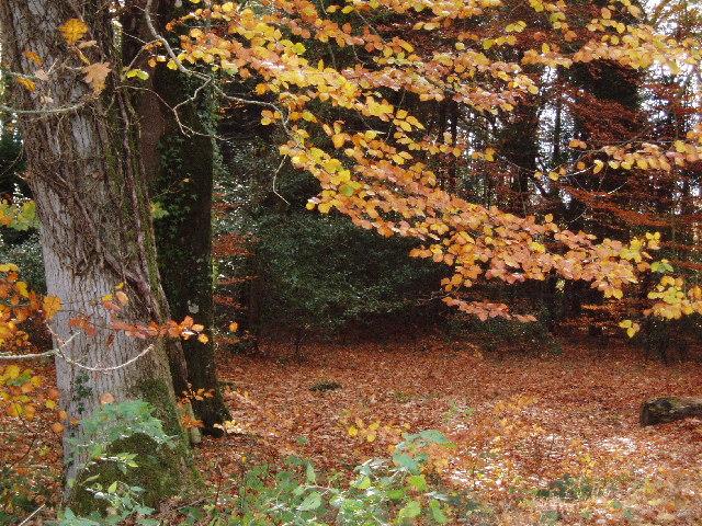 Abbeyford Woods, Okehampton