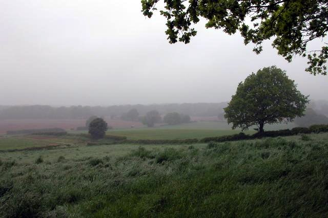 Looking across farmland to Durford Wood