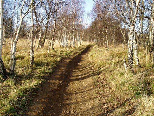 Fryston Wood