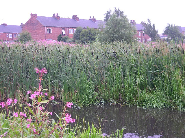 Rushes at the end of Pottery Street, Castleford