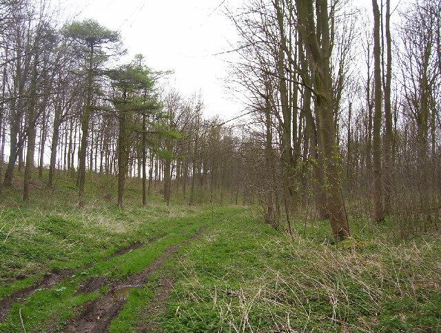Ashslack Woods