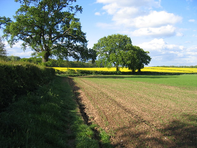 View towards Stubb's Wood