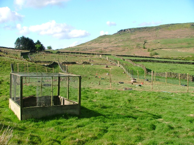 Pheasant Rearing, Bilsdale