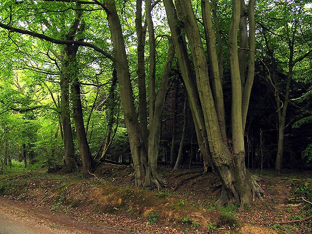 Fence Wood off Fence Lane