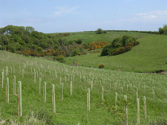 Tree planting in the Buddon valley
