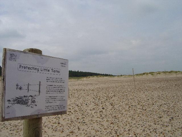 Dunes near Holkham