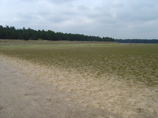 Saltmarsh at Holkham